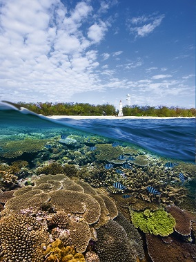 Photo of reef at Lady Elliot Island, Bundaberg