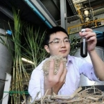 Researcher holding pulped sugar cane and biofuel