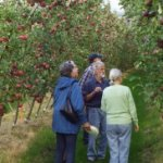 Researchers inspecting apple crops